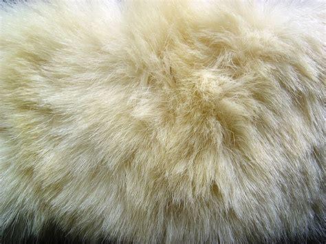 polar fur color fur texture