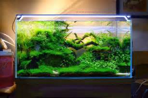Aquarium Designs Evens Construction Pvt Ltd Aquarium Designs