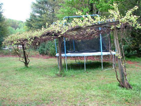 free plans to build this diy trellis clothesline save so i want to build a grape trellis