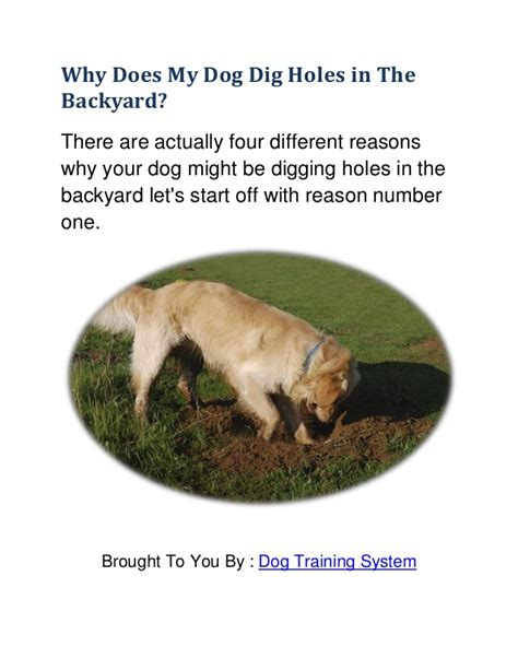 4 reason why dog digging in the backyard learn how to