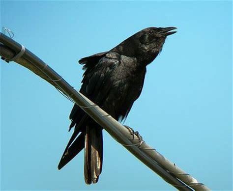 17 best images about louisiana on pinterest bird