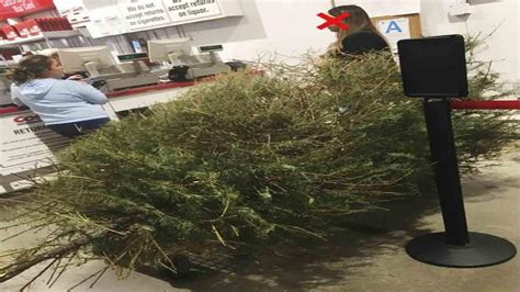 when does costco sell christmas trees irate after costco lets return dead tree in january abc11