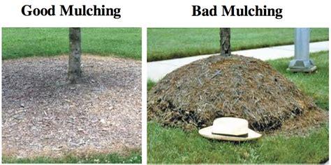 proper mulching tree fredericksburg