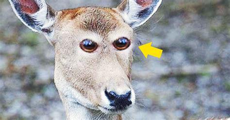 imagenes ojos de animales 8 extra 241 as im 225 genes que muestran c 243 mo ser 237 an los animales