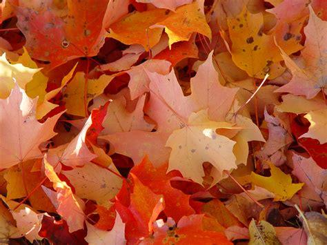 fall  love  foliage  autumn   amazing