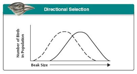 biology blog 4 describe the three types of selection