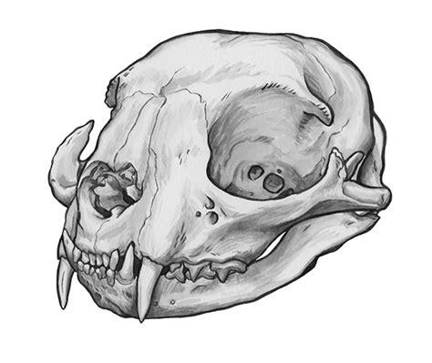 tattoo ink animal bones animal skull series on behance