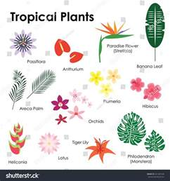 tropical plant names and pictures vector illustration tropical plants pictures names stock