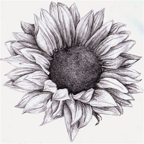 black and white sunflower tattoo designs sunflower drawing zoeken plaatjes