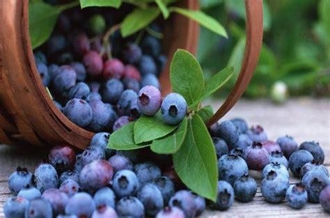 colite alimenti dieta per la colite la cura parte dall alimentazione corretta