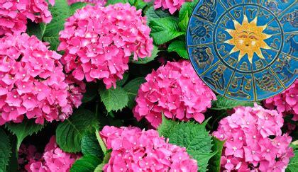 oroscopo dei fiori oroscopo dei fiori qual 232 la pianta cancro leitv