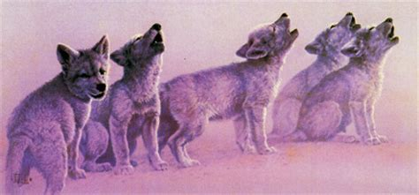 Caple Soul Mate the different types of wolves