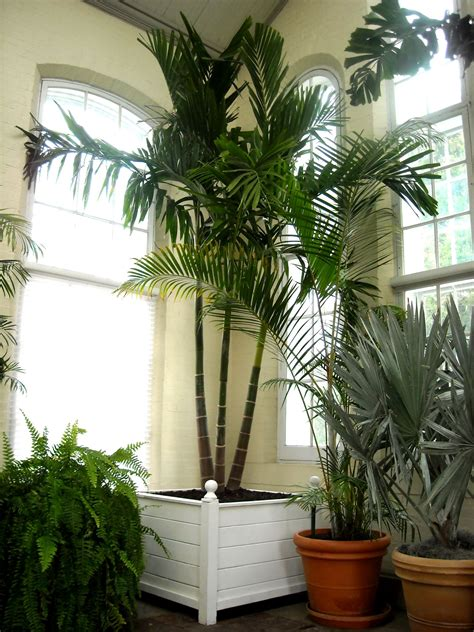 house trees palm piper house walter knoll florist client exotic palm trees walter knoll