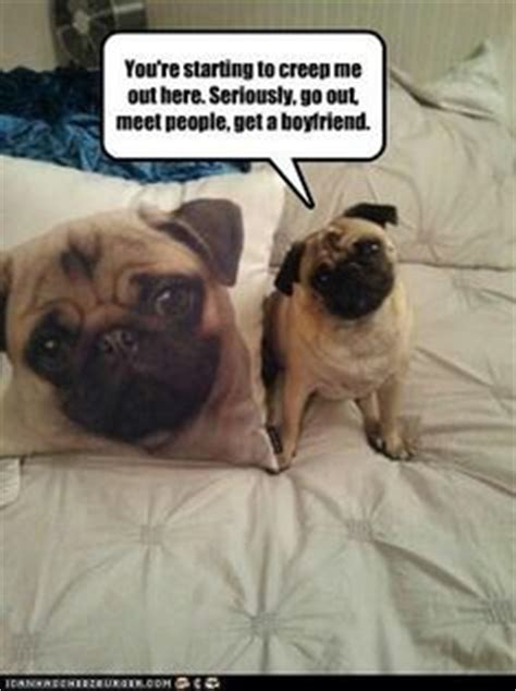pug freaking out pugs on pics dogs and jokes