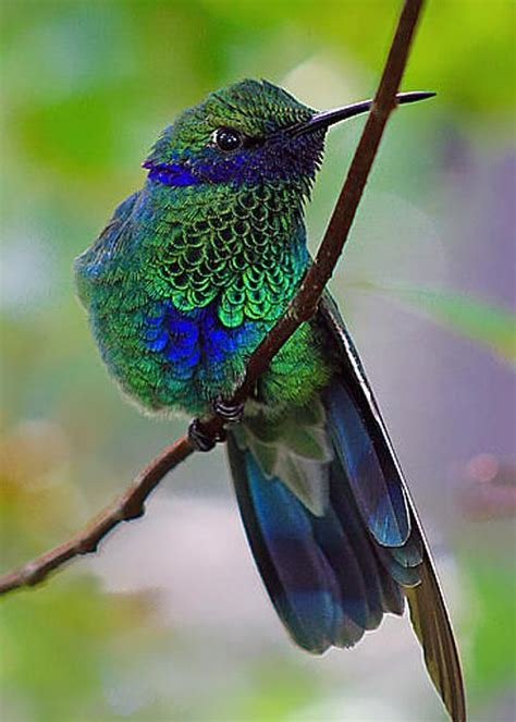 colibri by sean johnstone look it s a hummingbird