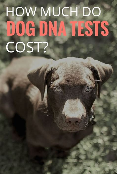 how much does a dna test cost 1000 ideas about dna test cost on gifts and you report