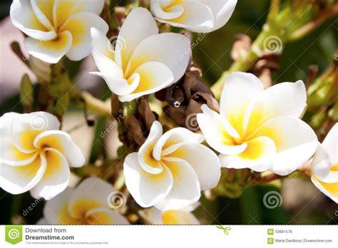 tipi di fiori bianchi tipi di fiori bianchi e gialli gpsreviewspot