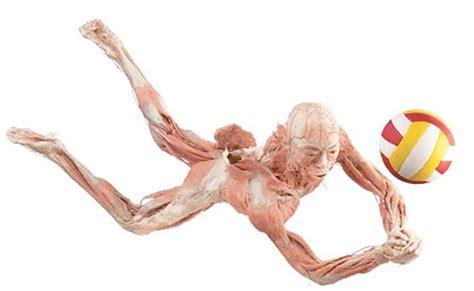 imagenes no realistas del cuerpo humano bodies the exhibition madrid y barcelona microsiervos