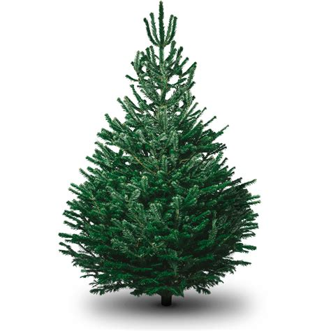 non drop 3 9ft christmas trees uk