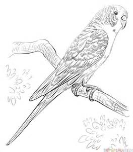 How To Draw A Blueprint How To Draw A Budgerigar Step By Step Drawing Tutorials