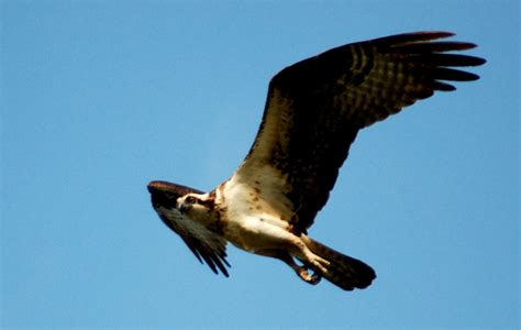 edupic birds of prey images