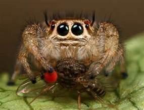 pet spider species