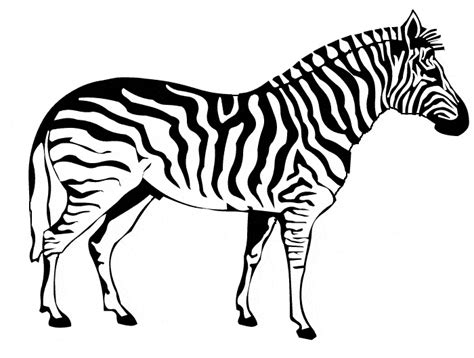 zebra coloring page animals town free zebra color sheet