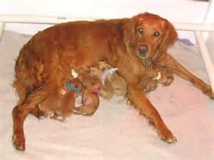 Search Newborn Puppies » Home Design 2017