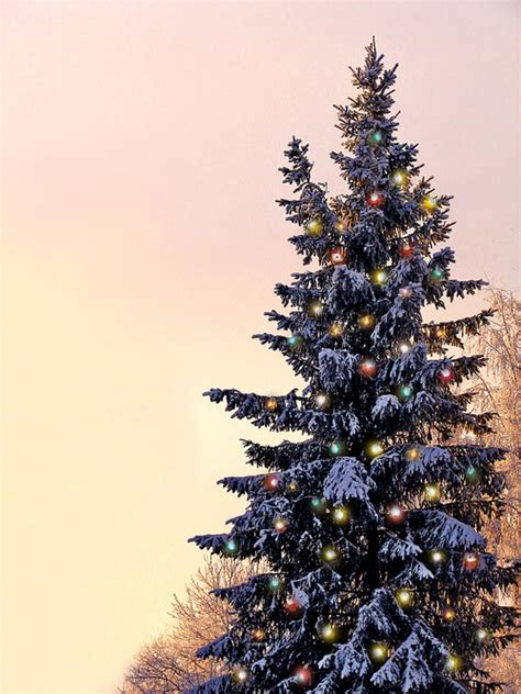 28 best what day does the christmas tree come