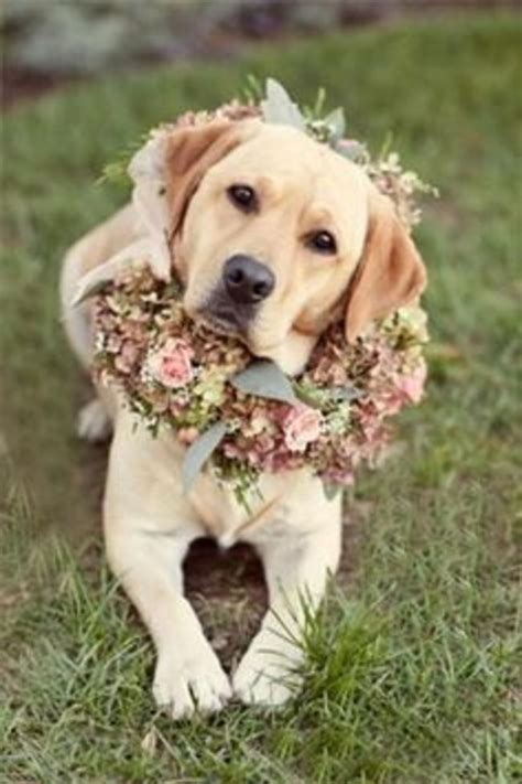 puppy wedding 14 awesome ways to include your on your big day barkpost