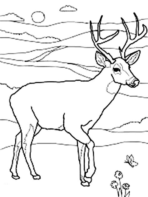 coloring pages of mule deer mule deer coloring pages north america page sun grig3 org