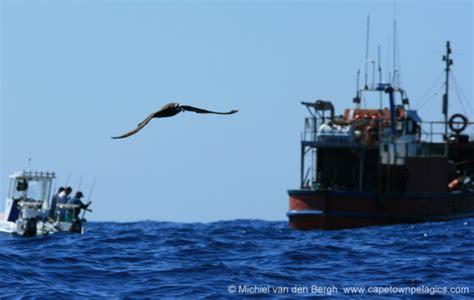 birding africa cape town pelagics blog news from