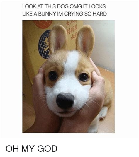 Crying Dog Meme - look at this dog omg it looks like a bunny im crying so