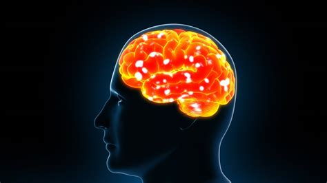 brain x human brain x