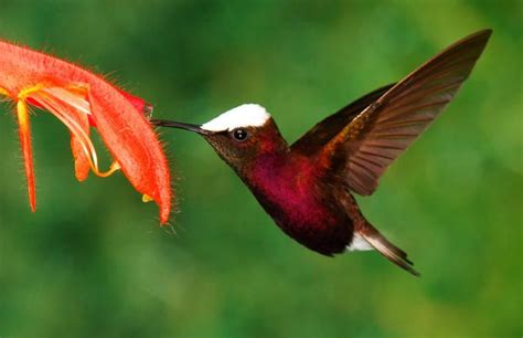 17 best ideas about hummingbird photos on pinterest
