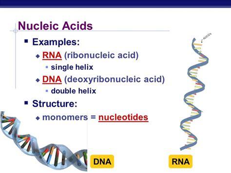 exle of nucleic acid iran