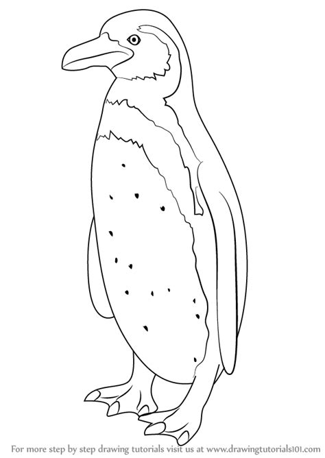 humboldt penguin coloring page humboldt penguin coloring coloring pages
