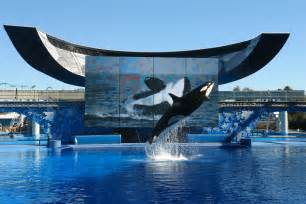 Sea World What Does The Future Hold For Seaworld Entertainment