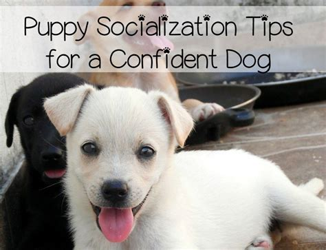 socializing a puppy puppy socialization the key to overcoming fears