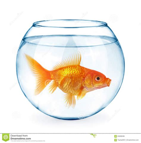 poisson dans l aquarium d isolement sur le blanc photo stock image 65898598