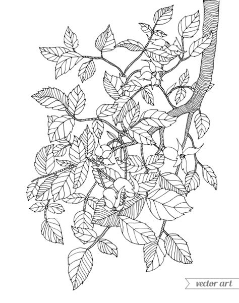 coloring page of a tree branch branch coloring page kidspressmagazine com