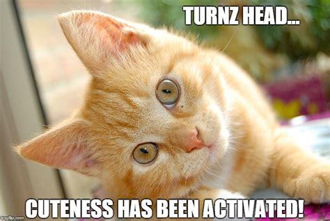 Cute Cat Meme Generator - cuteness has been activated imgflip