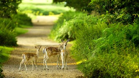 animals zoo park 3d nature hd nature wallpapers for nature wallpaper in hd wallpapersafari