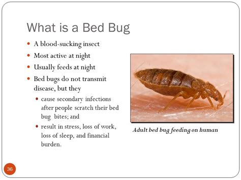 what causes bed bugs to come out what cause bed bugs bed bugs chemical cover caveats not