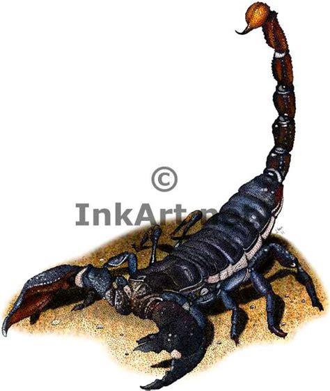 scorpion colors colorful scorpions animals