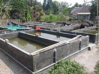 Budidaya Ikan Nila Belajar Dari Praktisi By H Khairuman Sp kung benih lele kolam permanen