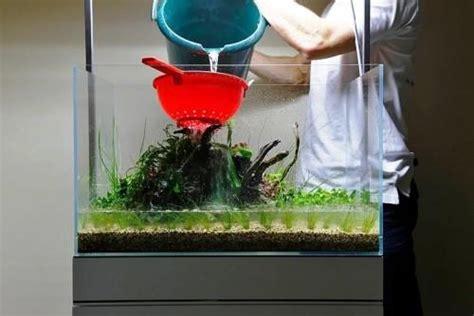 cara membuat aquascape rock cara membuat aquascape yang murah dan sederhana