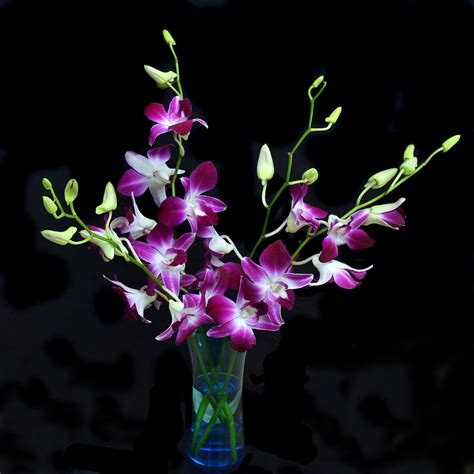 Sprei Orchid Orchid Spray Photograph By Terence Davis