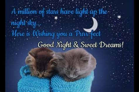 purr fect good night wishes  good night ecards greeting cards