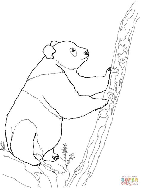 china panda coloring coloring pages